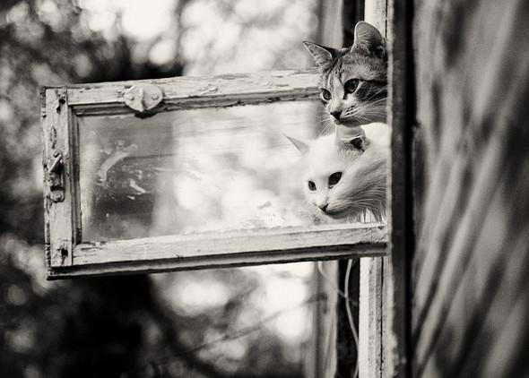 Блудливые коты. Изображение № 14.