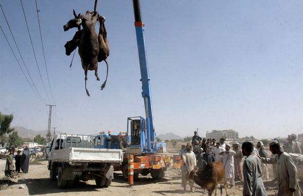 Афганистан. Военная фотография. Изображение № 135.