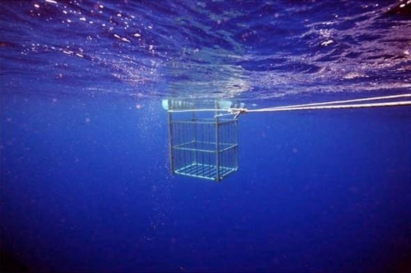 Подводные фотографии Джеймса Купера. Изображение № 6.