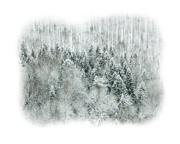 Зима в очень средней полосе. Изображение № 21.