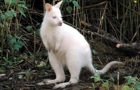 Животные-альбиносы. Изображение № 5.
