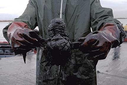 Крупнейшая экологическая катастрофа!. Изображение № 3.
