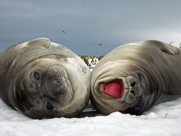 Лучшие снимки от National Geographic (золотой фонд). Изображение № 48.