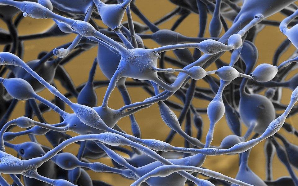 Как изменились наши представления о мозге за последние 10 лет. Изображение № 3.