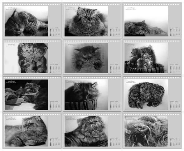 Кошки, люди, карандаш. Paul Lung. Изображение № 20.