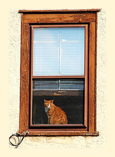 Cat. Window. Изображение № 33.