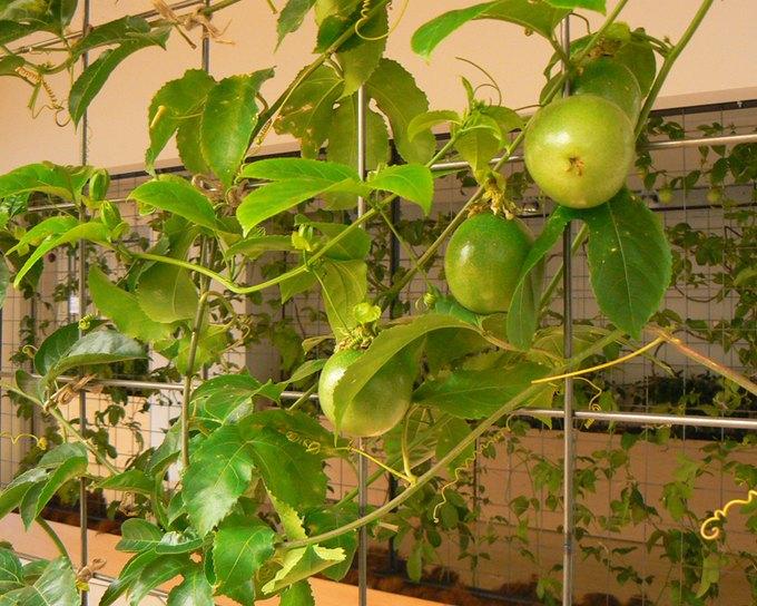 Фото: konodesigns.com. Изображение № 11.
