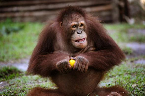 Лоун Дрошер-Нилсен и её обезьянки. Изображение № 8.