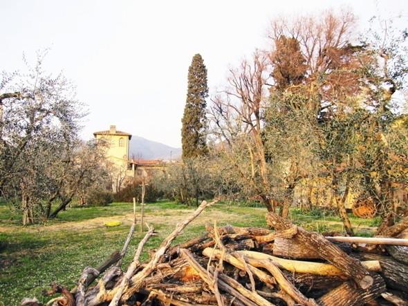 Изображение 6. Тосканское масло.. Изображение № 11.