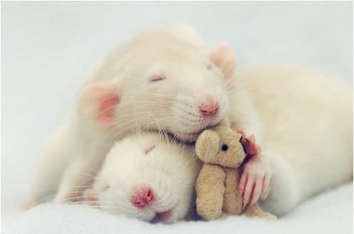 Фотосессия крысят отJessica Florence. Изображение № 3.