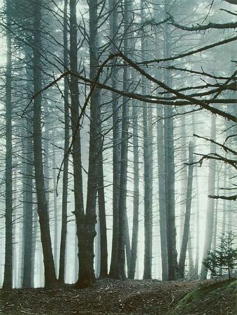 Элиот Портер: фотограф раскрасивший мир. Изображение № 4.