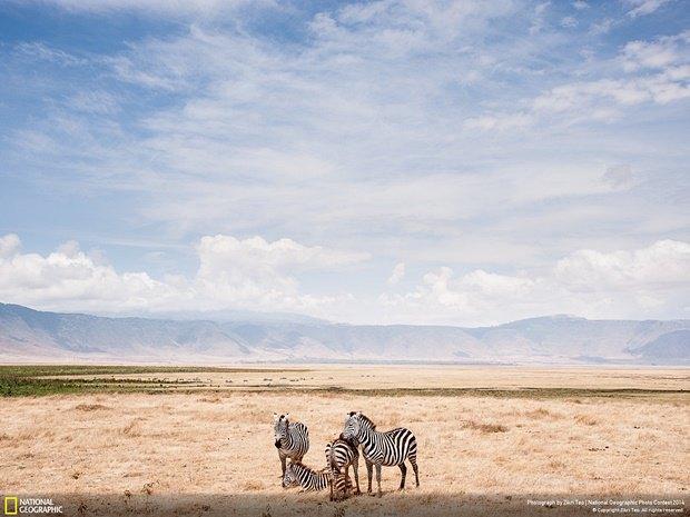 Фотограф:  Zik Teo / Место: Танзания. Изображение № 19.