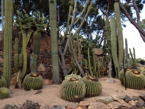 Ботанический сад. Изображение №63.