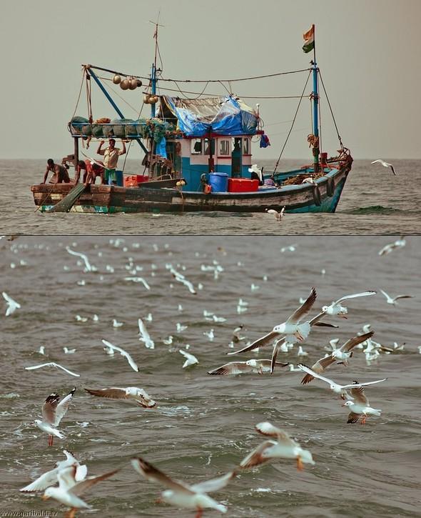 Shrimp boat MFR 646 DF GOA - Non stop. Изображение № 20.