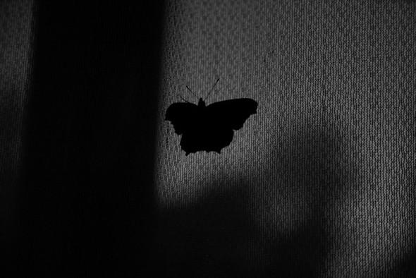 Черно-белые путешествия. Изображение № 19.