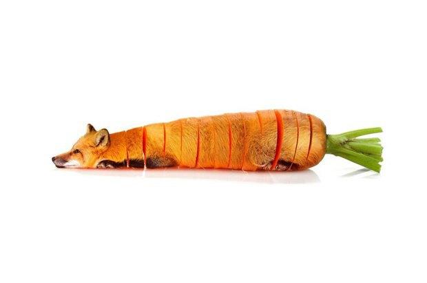 Концепт: животные в виде фруктов. Изображение № 8.