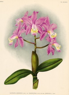 Глянцевые орхидеи: слухи, сплетни, комментарии. Изображение № 4.