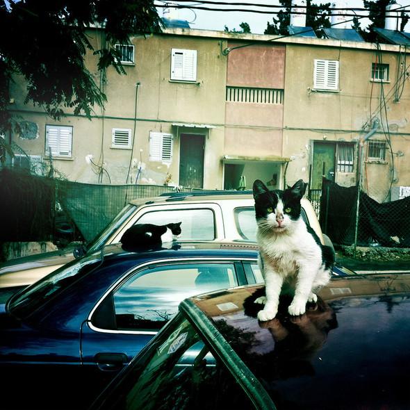 Котики и авто. Изображение № 7.