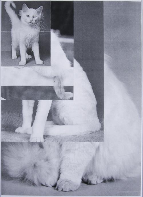 Кошка сама по себе. Изображение № 9.