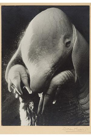 Гид по сюрреализму. Изображение № 68.