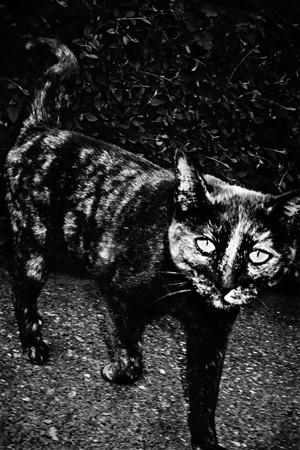Андерш Петершен - живая легенда шведской фотографии. Изображение № 16.