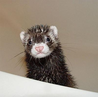 50 животных, которые ненавидят мыться. Изображение № 39.