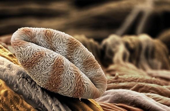 Микроскоп-2: Пыльца. Изображение № 4.