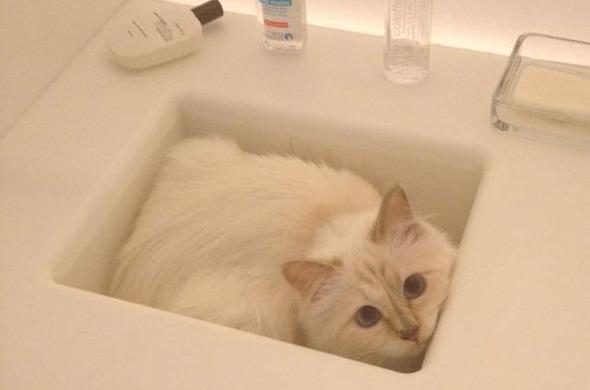 Кошка Карла Лагерфельда снялась для i-D. Изображение № 10.