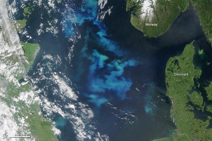 Цветение планктона в море показали со спутника. Изображение № 3.