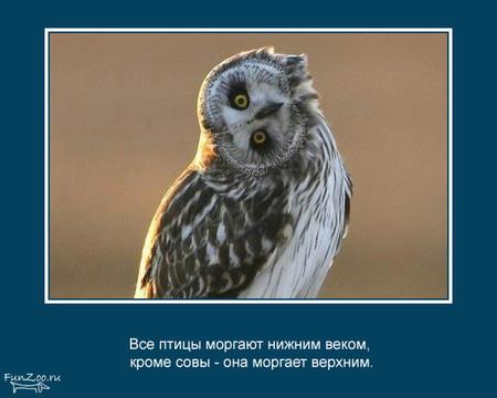 Животные иинтересные факты оних. Изображение № 8.