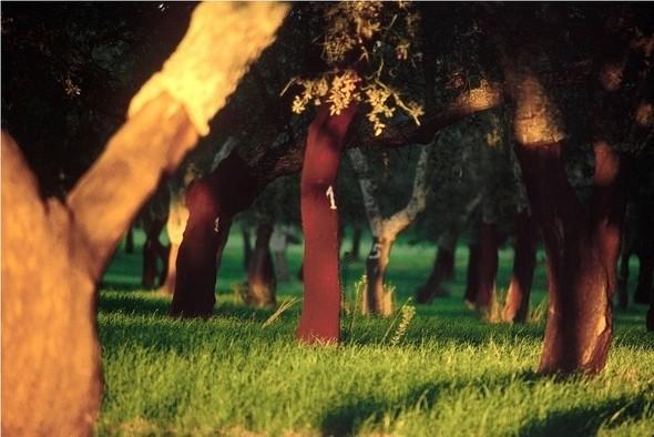 Изображение 10. Другая Португалия – необычное путешествие в страну пробковых лесов.. Изображение № 3.