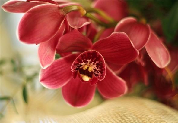 Орхидея. Изображение № 3.