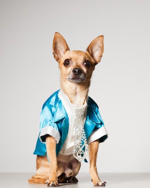 Вышла книга о кутюре для собак. Изображение № 6.
