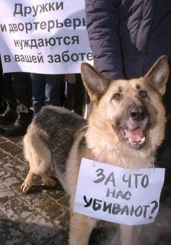 Отстрел бездомных собак. Помогите животным!. Изображение № 1.