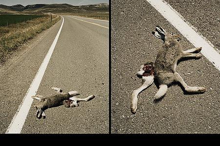 Matteo Ferrari, фотограф «От моды кмертвым зайцам». Изображение № 15.