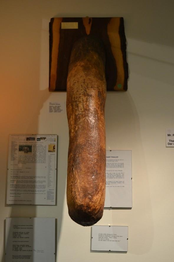 Фаллологический музей вернулся в Рейкьявик. Изображение № 12.