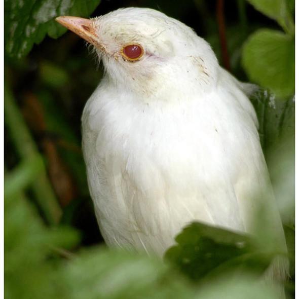 Животные-альбиносы. Изображение № 8.