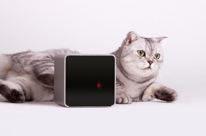 Украинские изобретатели гаджета для животных Petcube вышли на Kickstarter. Изображение № 3.