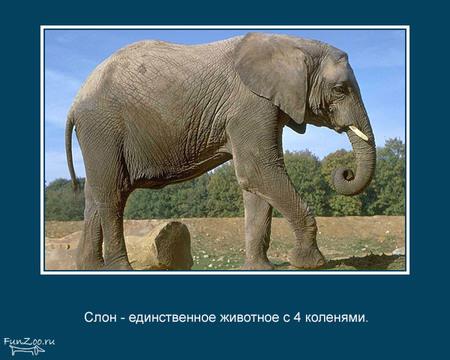 Животные иинтересные факты оних. Изображение № 1.