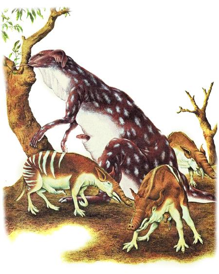 Зоология дляпутешественников вовремени. Изображение № 18.