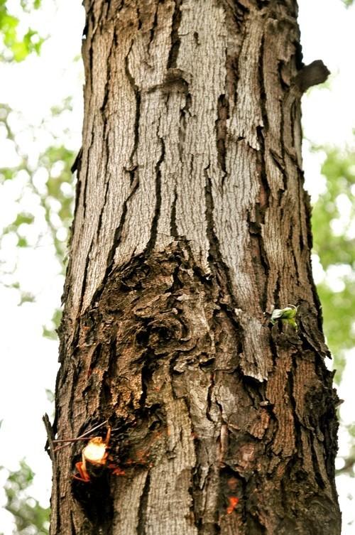 Treefilia. Изображение № 17.