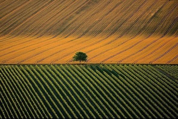 Сельскохозяйственный ландшафт возле города Коньяк, Франция. Изображение № 3.