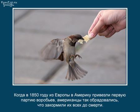 Животные иинтересные факты оних. Изображение № 22.