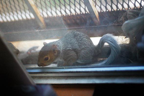 Белка в нашем окне. Изображение № 26.