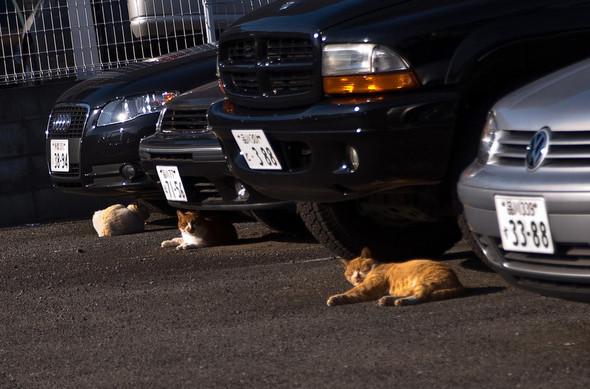 Котики и авто. Изображение № 4.