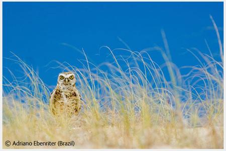 Победители Wildlife Photographer 2008. Изображение № 37.