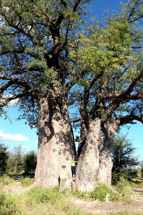 Остров баобабов в Ботсване. Изображение № 5.