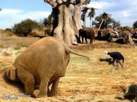Какспрятать слона. Изображение № 3.