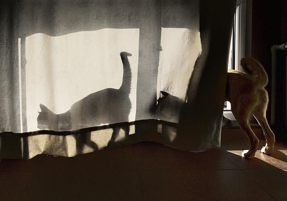 Блудливые коты. Изображение № 17.