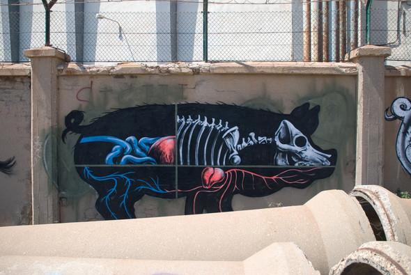 Животный стрит-арт от бельгийского граффитчика ROA. Изображение № 9.